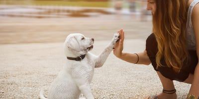 ¿Qué tanto sabes de perros?
