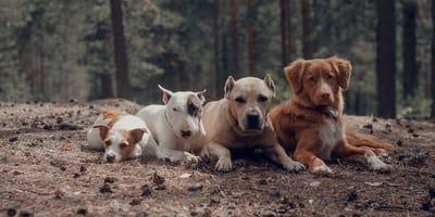 ¿Qué tamaño de perro te gusta?